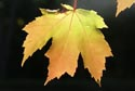 Image Ref: 9907-10-4 - Fall Color, Maine, Viewed 9071 times