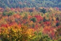 Image Ref: 9907-10-5 - Fall Color, Maine, Viewed 10410 times
