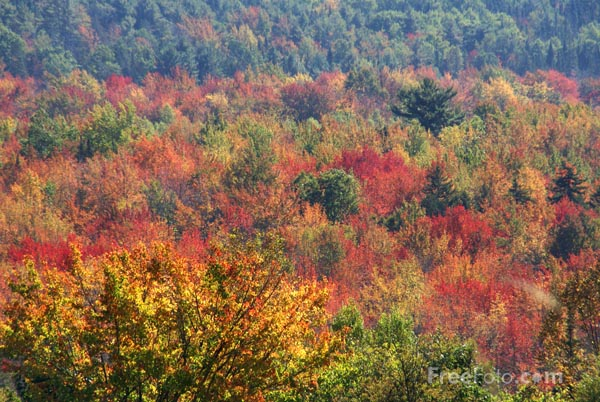 Picture of Fall Color, Maine - Free Pictures - FreeFoto.com