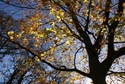 Image Ref: 9907-11-1 - Autumn Colour, Viewed 6619 times