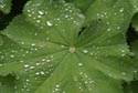 Image Ref: 9908-08-2948 - Raindrops, Viewed 7137 times