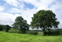 Image Ref: 9908-08-3004 - Tree and green field, Viewed 5783 times