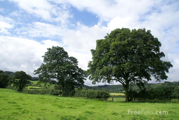 Picture of Tree and green field - Free Pictures - FreeFoto.com
