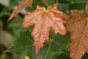 Image Ref: 9908-08-3024 - Autumn Colour, Viewed 5179 times