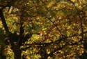 Image Ref: 9908-10-6285 - Autumn Colour Fall Color, Viewed 4853 times