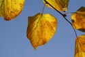 Image Ref: 9908-10-6305 - Autumn Colour Fall Color, Viewed 5805 times