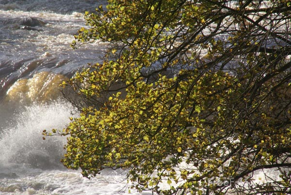 Picture of Aysgarth Falls, Wensleydale - Free Pictures - FreeFoto.com