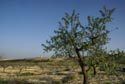 Image Ref: 9908-11-6698 - Olive Grove, Viewed 5662 times