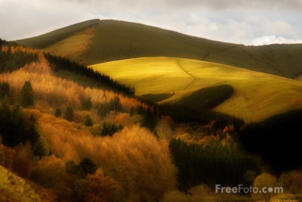 Picture of Autumn colour in the Tweed Valley - Free Pictures - FreeFoto.com
