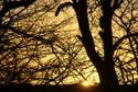 Image Ref: 9908-12-8266 - Trees at Sunset, Viewed 6357 times