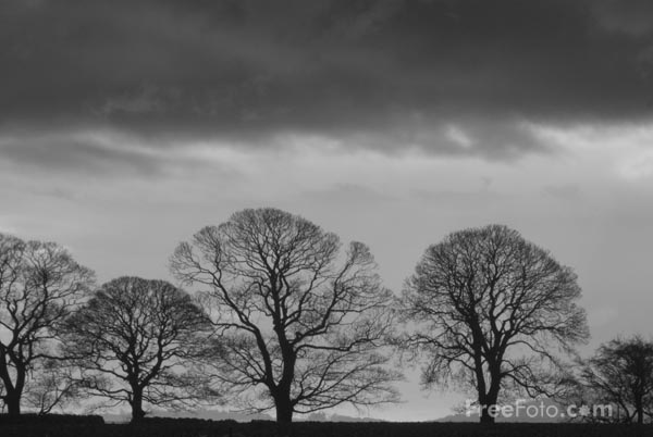 Picture of Winter trees with a grey sky - Free Pictures - FreeFoto.com
