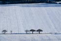 Image Ref: 9909-01-8709 - Line of trees in the winter, Viewed 7233 times