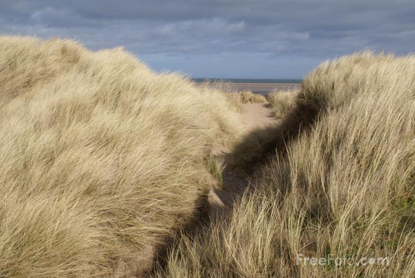 Picture of Grass covered sand dunes and footpath - Free Pictures - FreeFoto.com