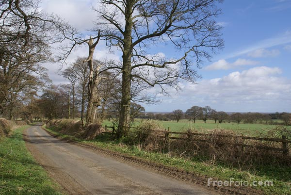Picture of Country Lane - Free Pictures - FreeFoto.com