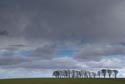 Image Ref: 9909-03-984 - Line of trees on a grey day, Viewed 6107 times