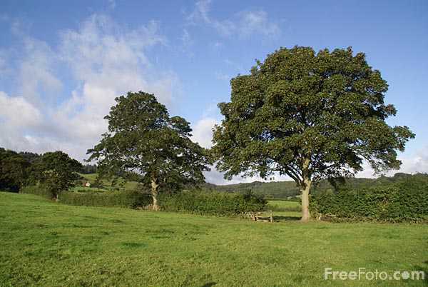 Picture of Trees, Nidderdale - Free Pictures - FreeFoto.com