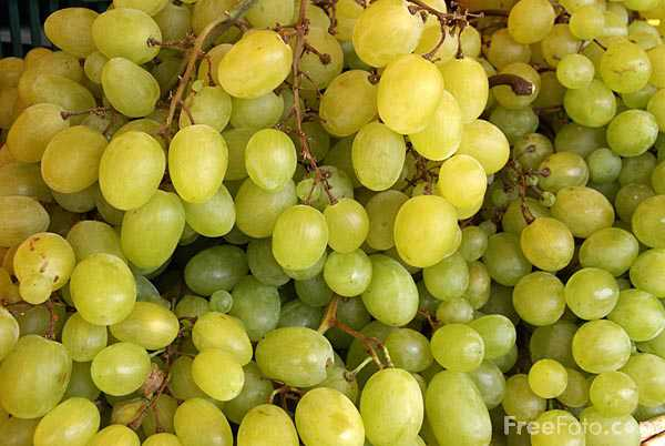 Picture of Grapes - Free Pictures - FreeFoto.com
