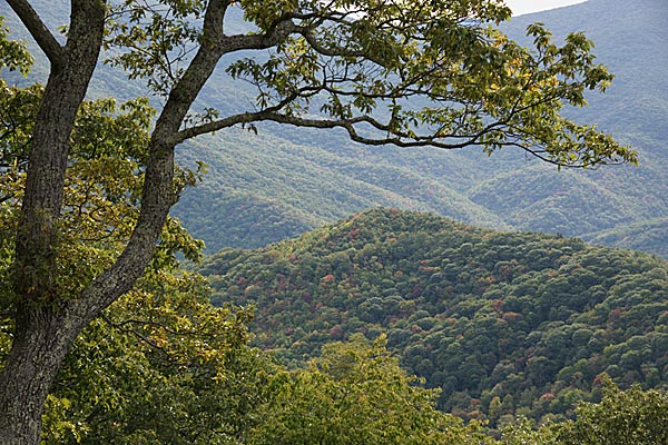 Picture of Fall Color, Blue Ridge Parkway - Free Pictures - FreeFoto.com