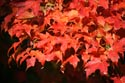 Image Ref: 9909-10-209 - Fall Color, Viewed 6473 times