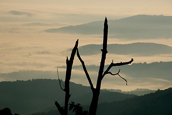 Picture of Dead Tree, Shenandoah National Park - Free Pictures - FreeFoto.com