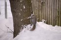 Squirrel in the snow has been viewed 6296 times
