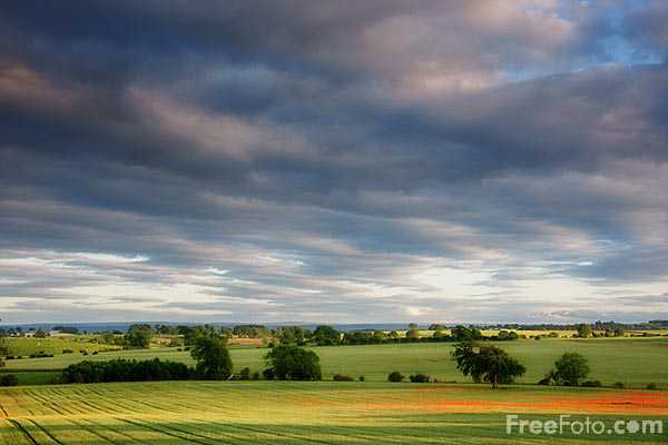 Picture of English Landscape on a Summer evening - Free Pictures - FreeFoto.com