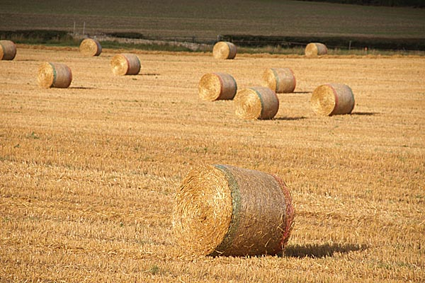 Picture of Straw Bales - Free Pictures - FreeFoto.com