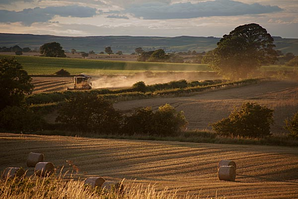 Picture of Harvest time - Free Pictures - FreeFoto.com