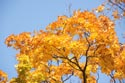 Autumn Colour has been viewed 2846 times
