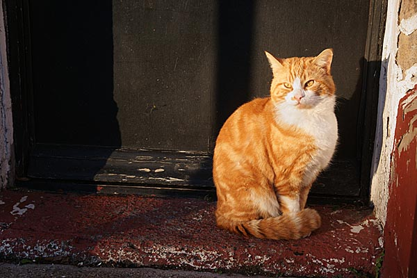 Picture of Cat sat on a doorstep - Free Pictures - FreeFoto.com