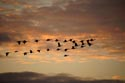 Image Ref: 9910-12-2210 - Sunset With Passing Flock Of Geese, Viewed 4489 times