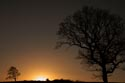 Tree at Sunset has been viewed 4129 times