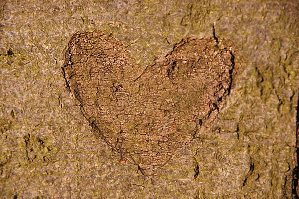 Picture of Wooden Heart - Free Pictures - FreeFoto.com