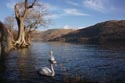 Ullswater, Lake District National Park, Cumbria has been viewed 4881 times