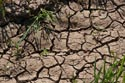 Image Ref: 9911-04-8528 - Parched Earth, Viewed 10366 times