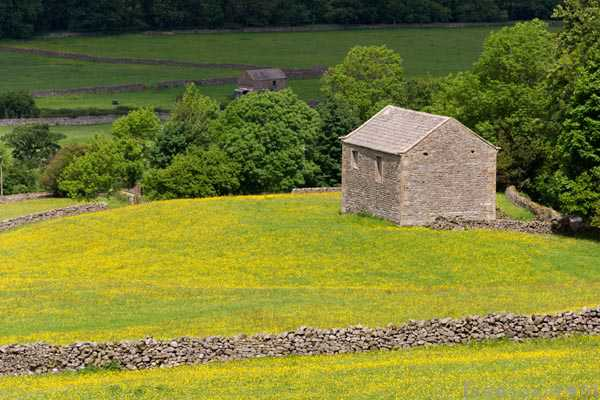 Picture of Field Barn, Swaledale - Free Pictures - FreeFoto.com